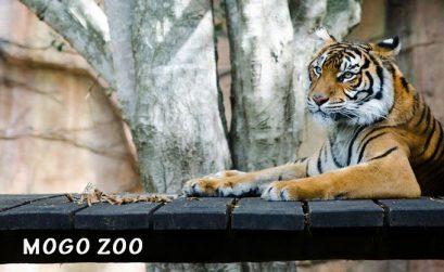 Mogo Zoo Prices