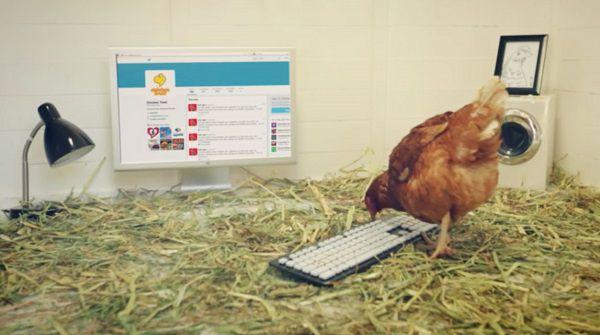 Betty The Chicken Mascot