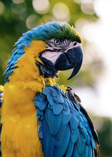 Macaw Animal Encounter Peel Zoo