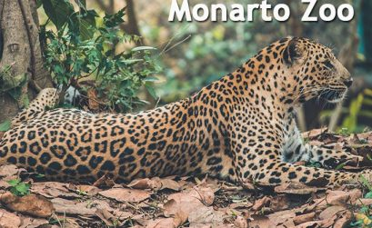 Monarto Zoo Prices