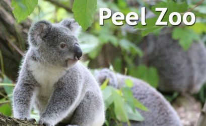 Peel Zoo Prices
