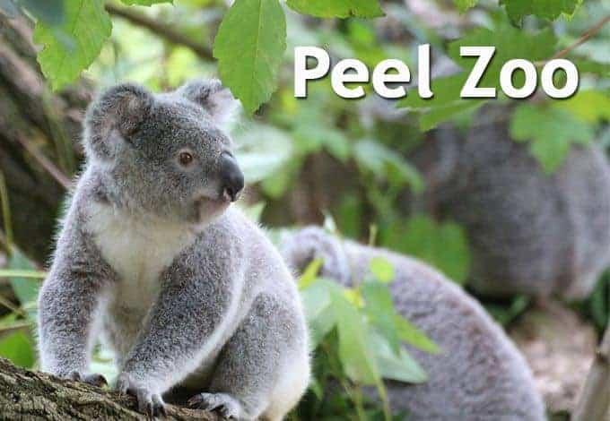 Peel Zoo Prices