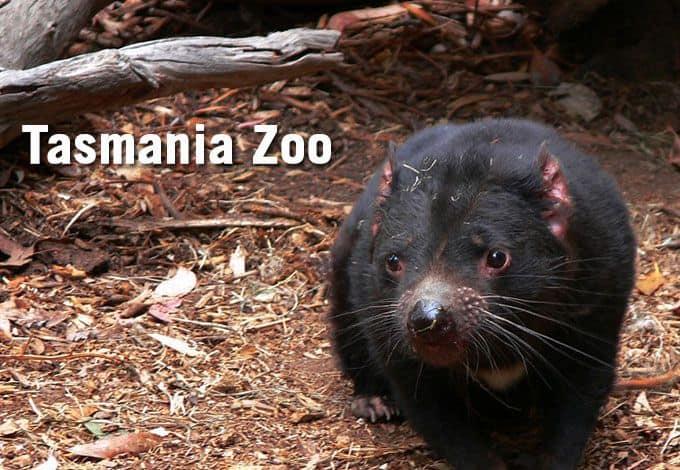 Tasmania Zoo Prices
