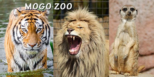 Ultimate Animal Encounter Experience Mogo Zoo