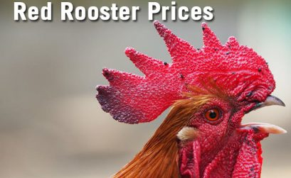Food Prices For Red Rooster Featured