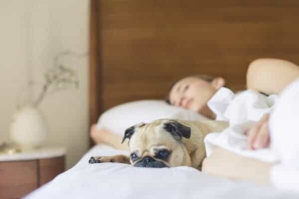 Girl & Her Dog Sleeping Comfortably On Bed